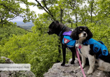 Visiting Pet Friendly Hot Springs National Park