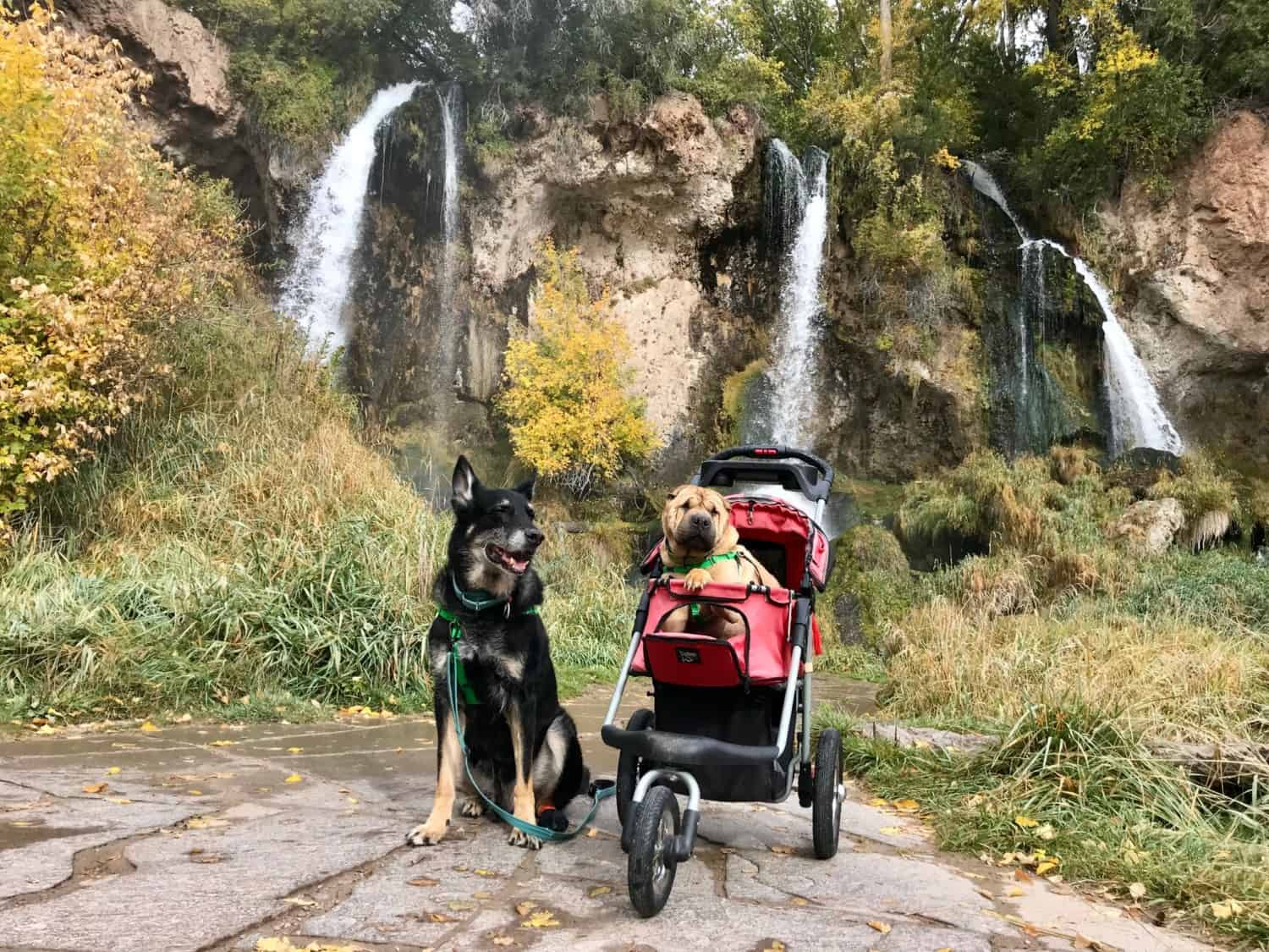 Buster and Ty, the GoPetFriendly.com dogs, on a pet friendly trail with waterfalls in the background