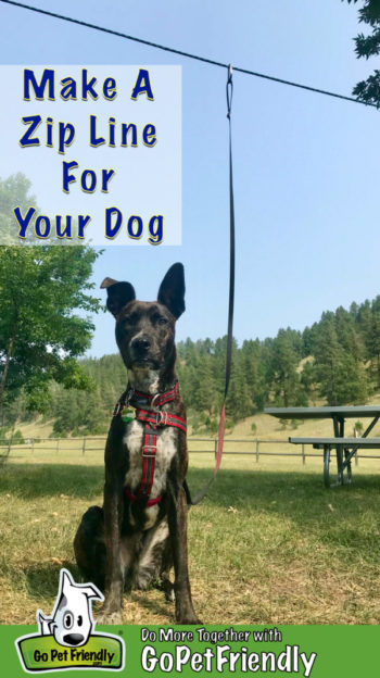 Brindle dog sitting in a campground on a zip line