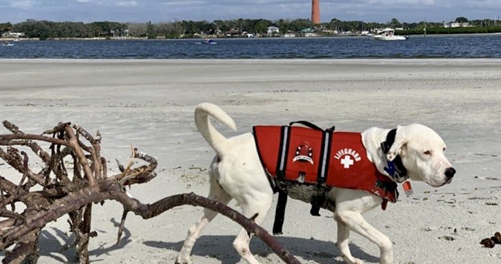 White dog in red life vest laying on the a pet friendly beach in Florida