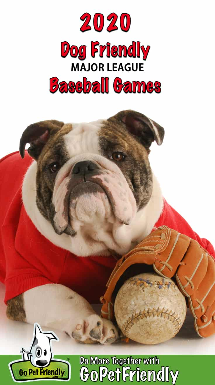 Bulldog in a red t-shirt with a baseball and glove