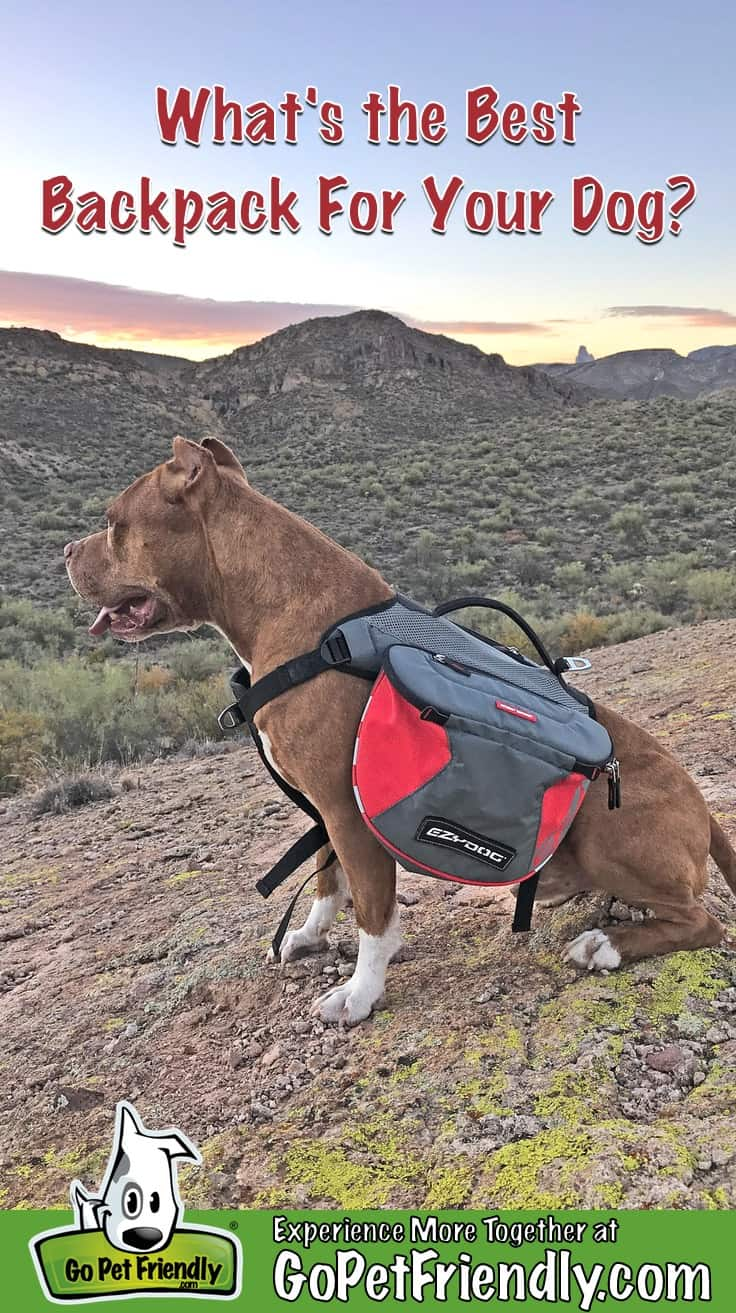 Dog wearing a red backpack sitting on a hill with mountains in the background