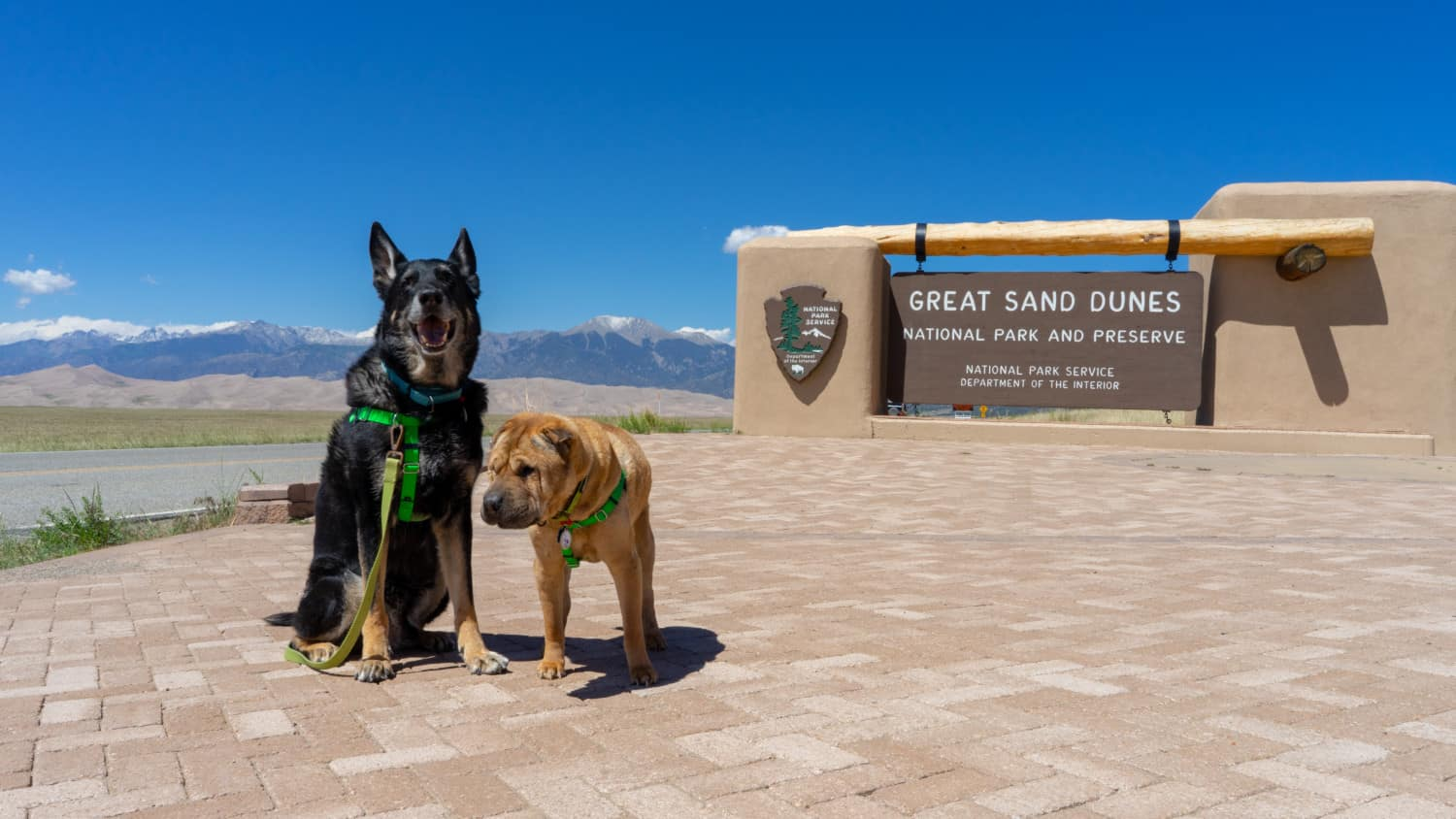 Buster and Ty, the GoPetFriendly.com dogs, at pet friendly Great Sand Dunes National Park
