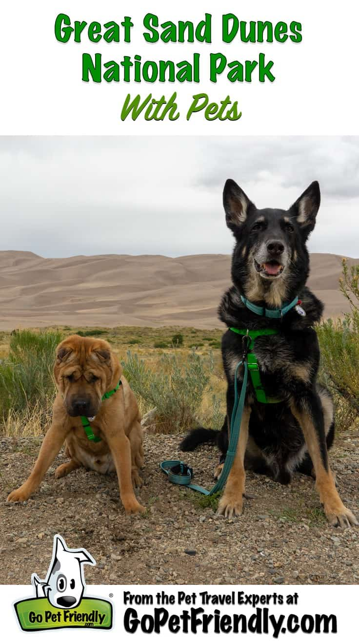 Ty and Buster, the GoPetFriendly.com dogs, posting at pet friendly Great Sand Dunes National Park