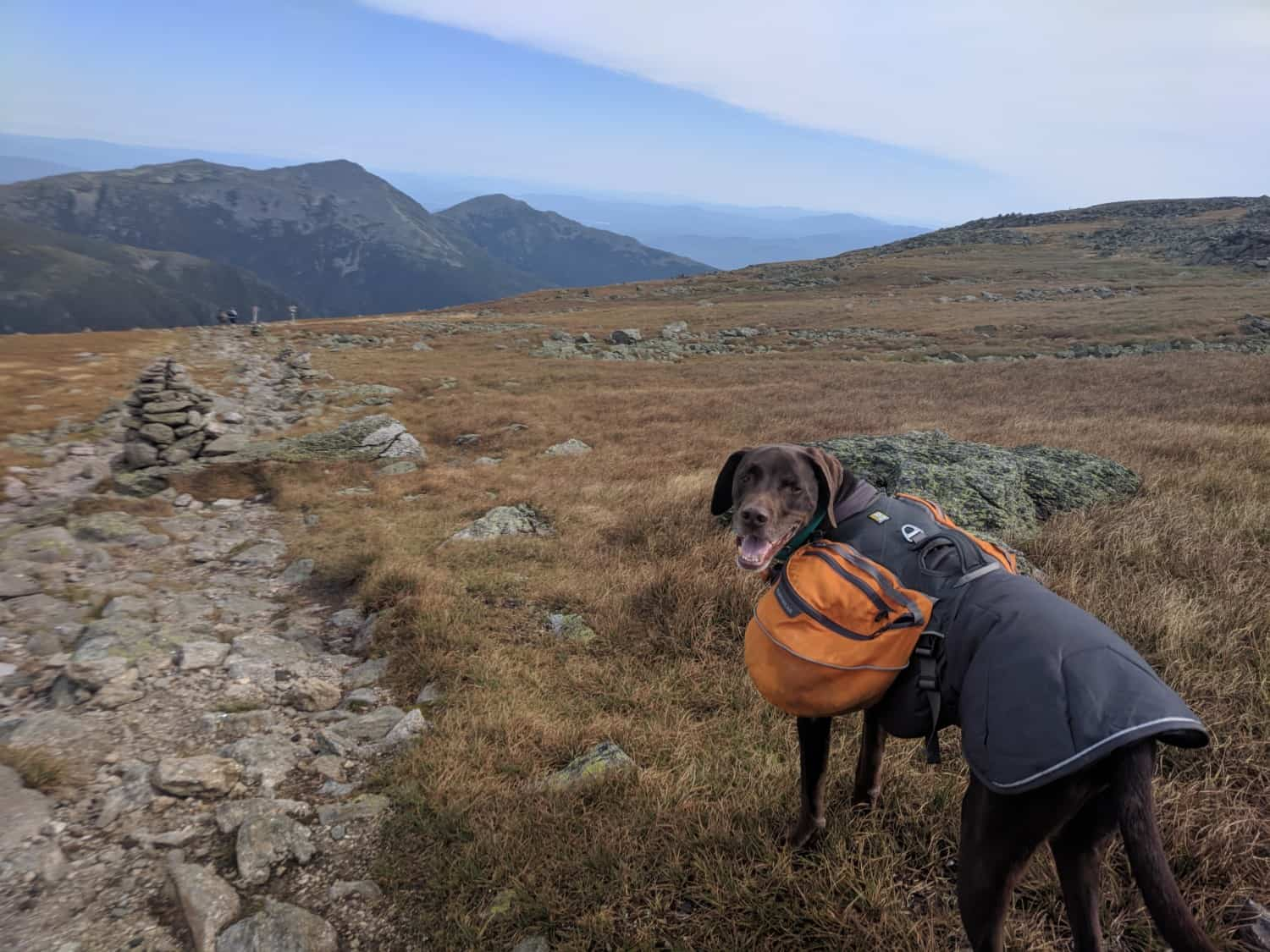Toby the dog hiking the pet friendly Appalachian Trail in New Hampshire