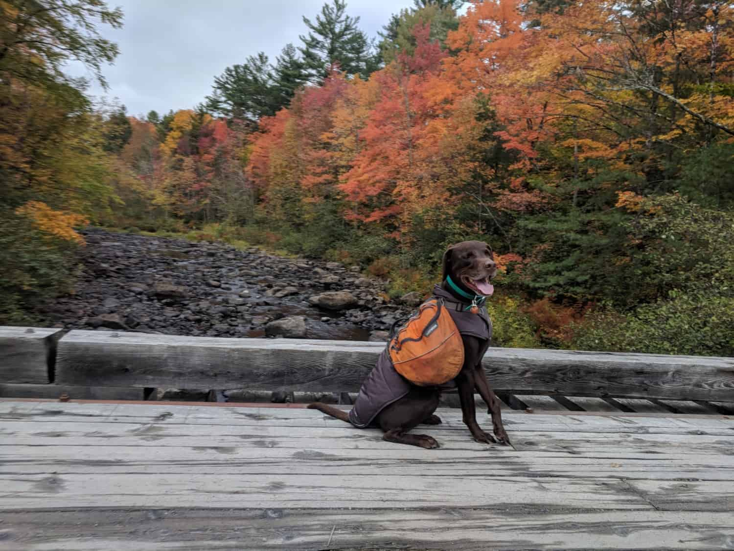 Toby the dog hiking the pet friendly Appalachian Trail in Maine