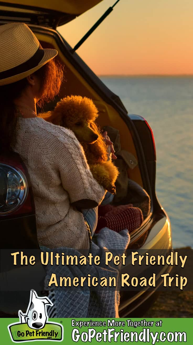 Woman and her dog on a pet friendly road trip sitting in the back of a car watching the sunset
