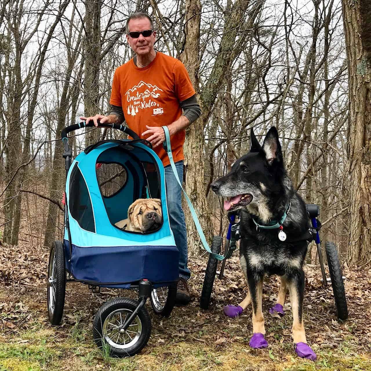 Buster the German Shepherd dog wearing purple boots on a pet friendly trail