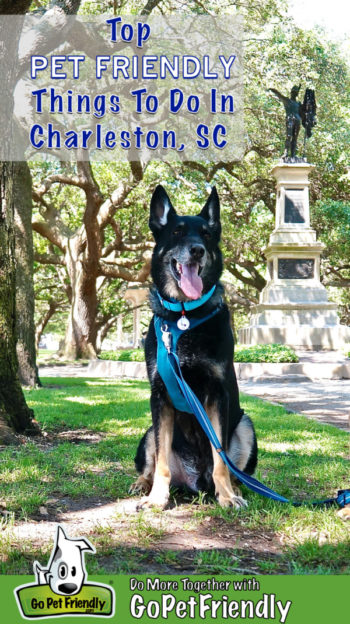 Smiling black German Shepherd Dog in pet friendly White Point Garden in Charleston, SC