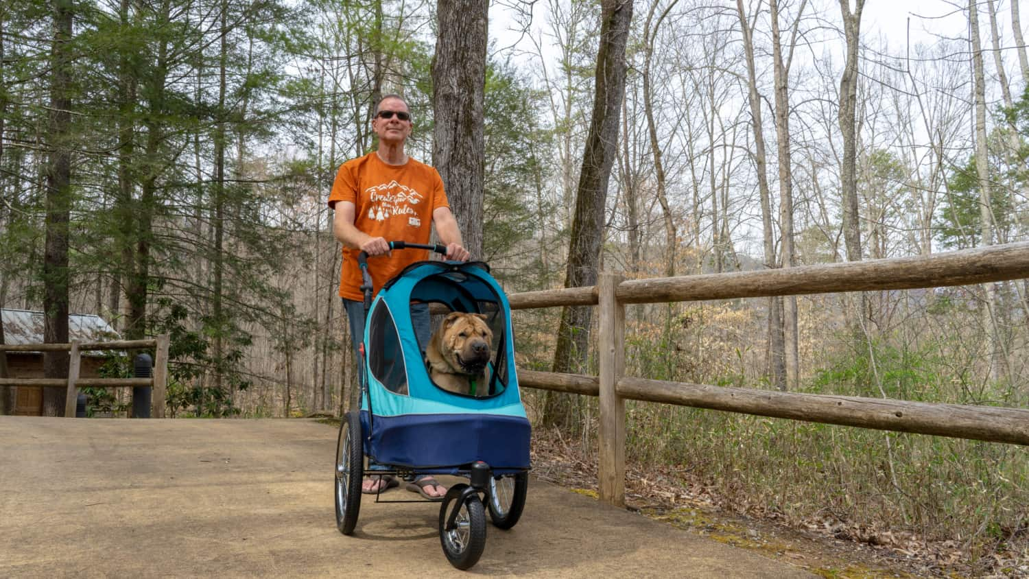 Ty the Shar-pei riding in the Petique All Terrain Pet Jogger stroller for dogs