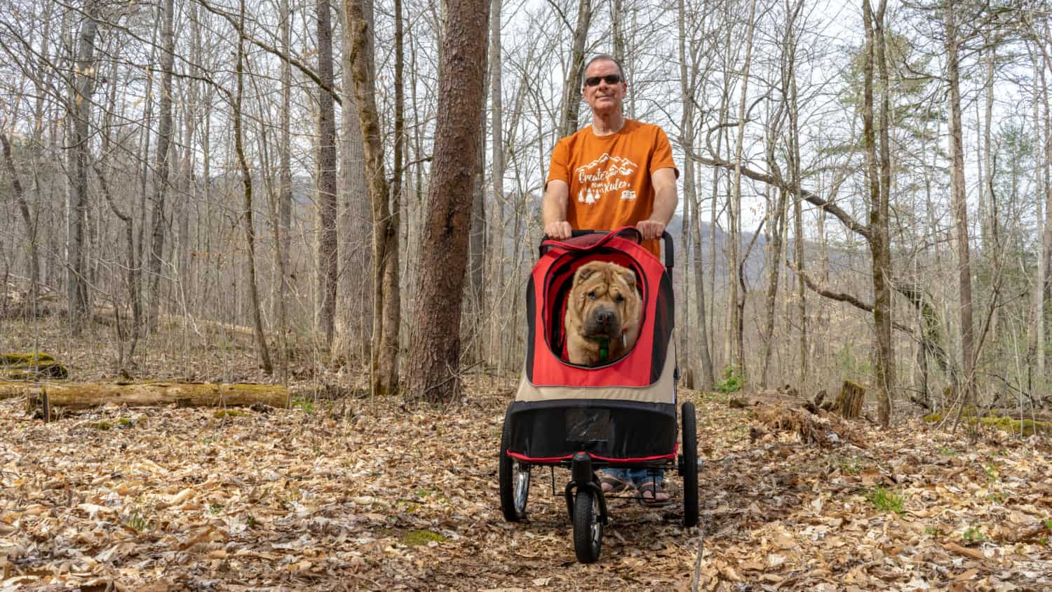 Ty the Shar-pei riding in the ibiyaya Happy Bicycle Trailer / Stroller for dogs