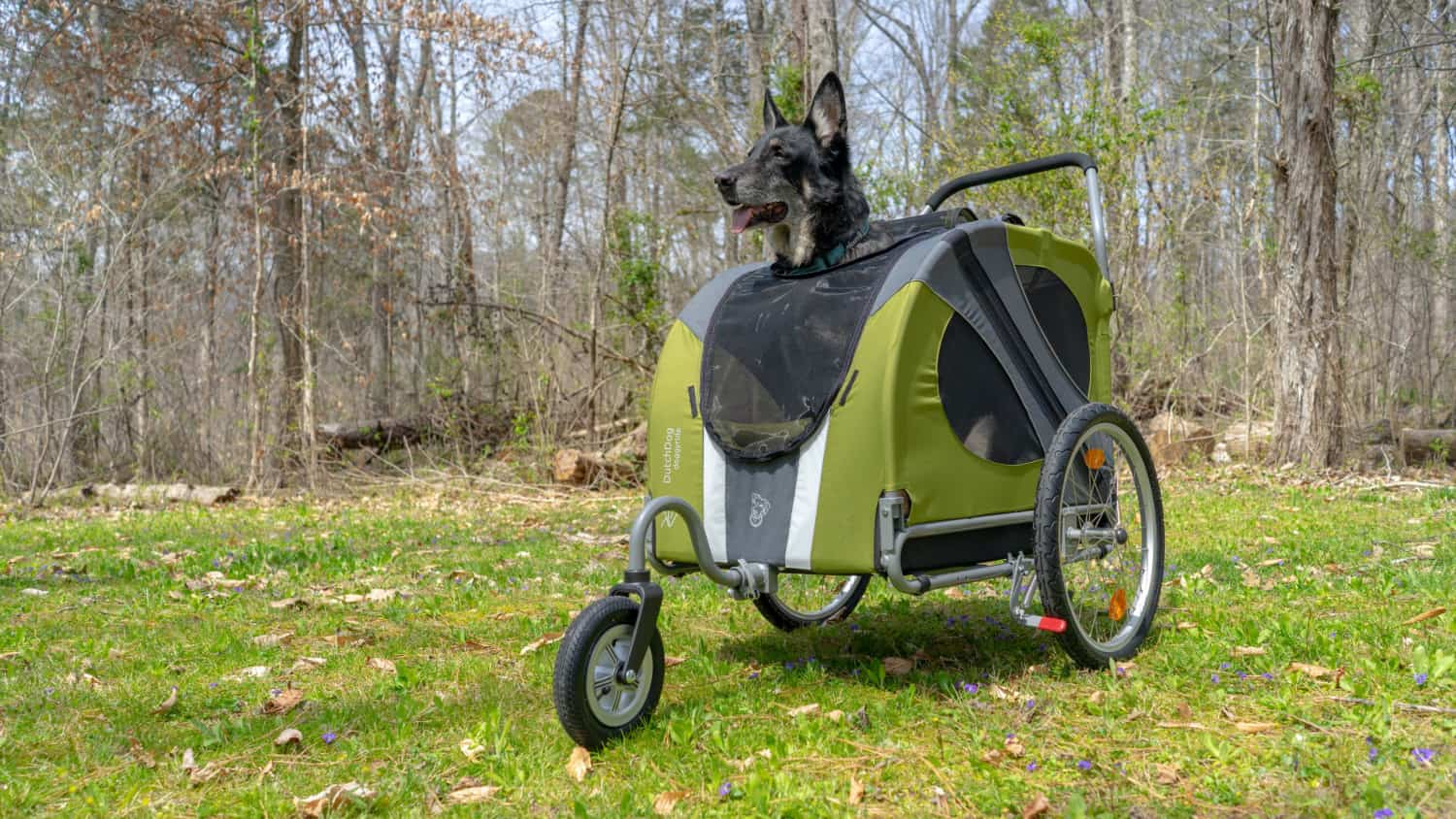 Buster the German Shepherd Dog in a green DoggyRide dog stroller