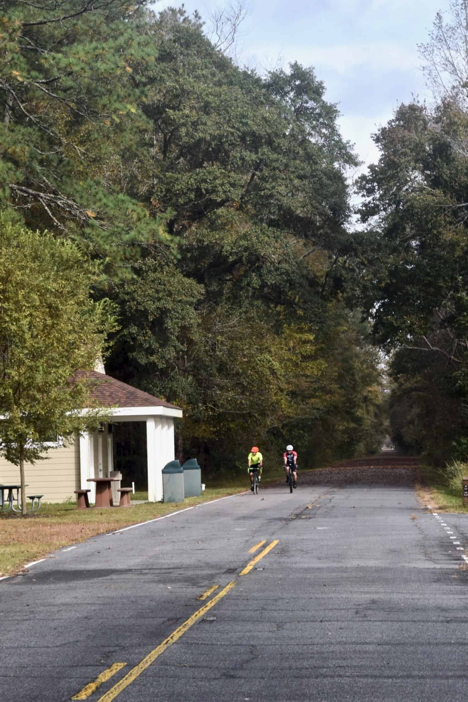 Bikes on Dismal Swamp path