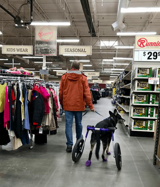 Man walking a dog in a wheel chair in a farm supply store