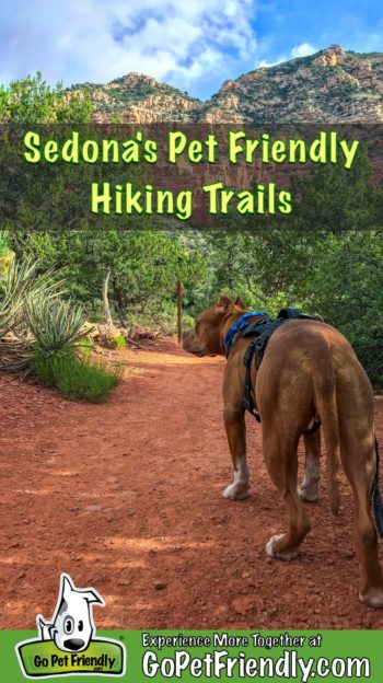 Pitbull dog, Hercules, on one of the dog friendly Sedona hiking trails