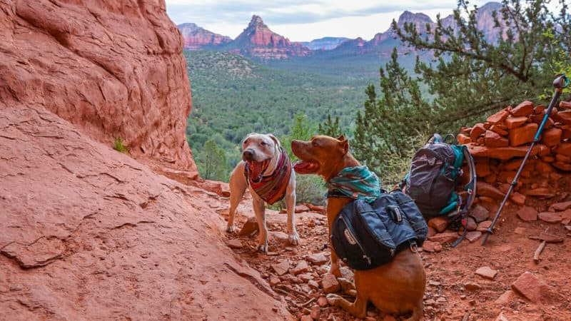 Sedona Hiking Trails That Allow Pets