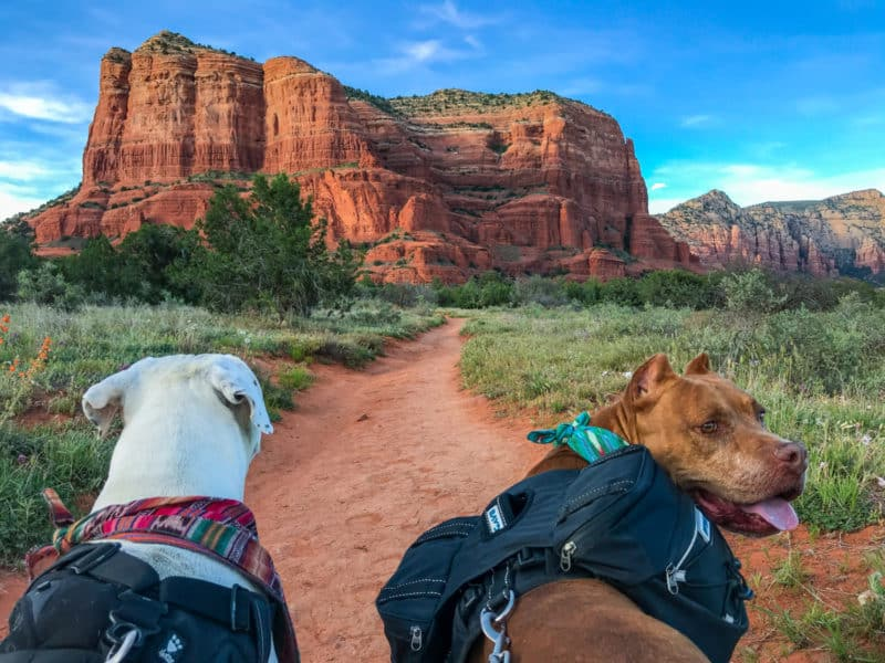 Two dogs on one of the pet friendly Sedona hiking trails with a massive red rock formation in the background