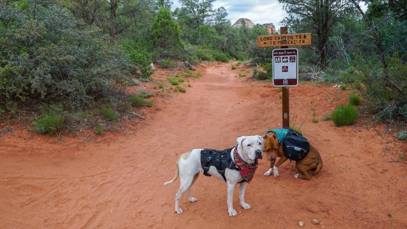 Two dogs on Long Canyon Trail near Sedona, Arizona