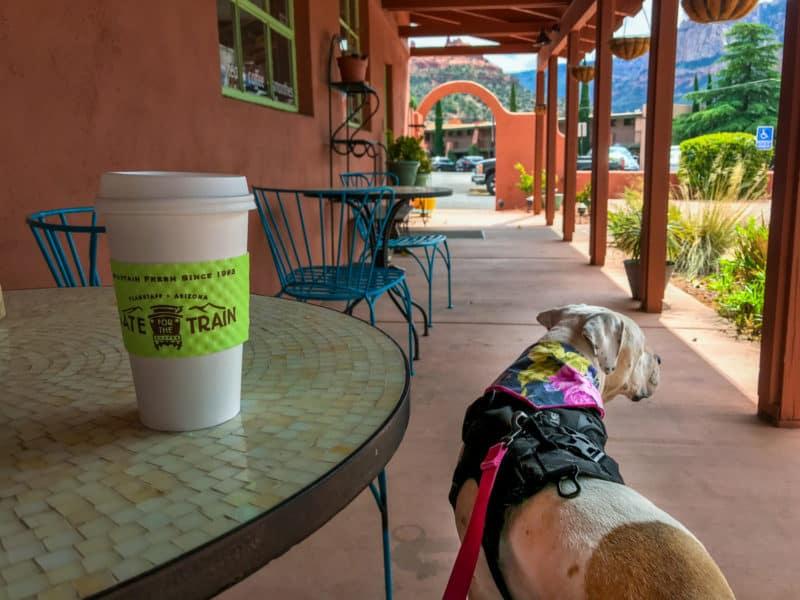 White dog on the pet friendly patio at Theia's Coffee Shop in Sedona, AZ