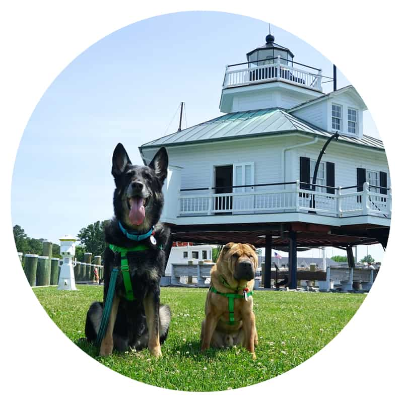 Two dogs sitting in front of the lighthouse on the Chesapeake Bay in St. Michaels, MD