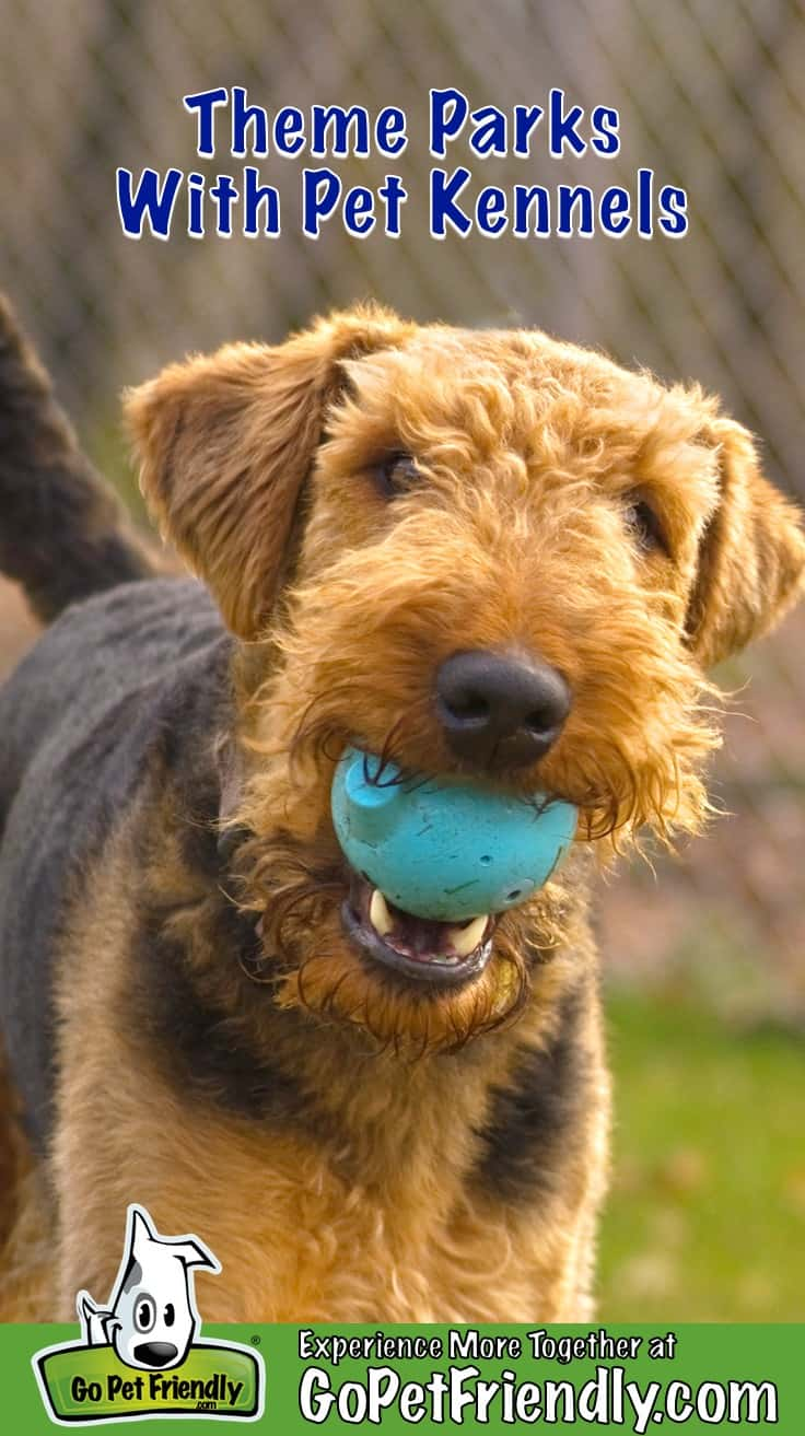 Airedale Terrier dog with ball in his mouth