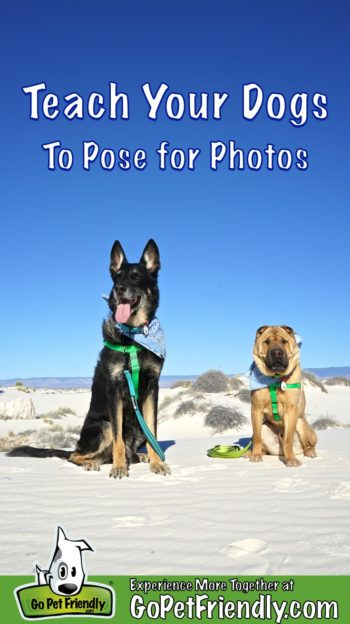 Two dogs posing for photos at White Sands National Monument