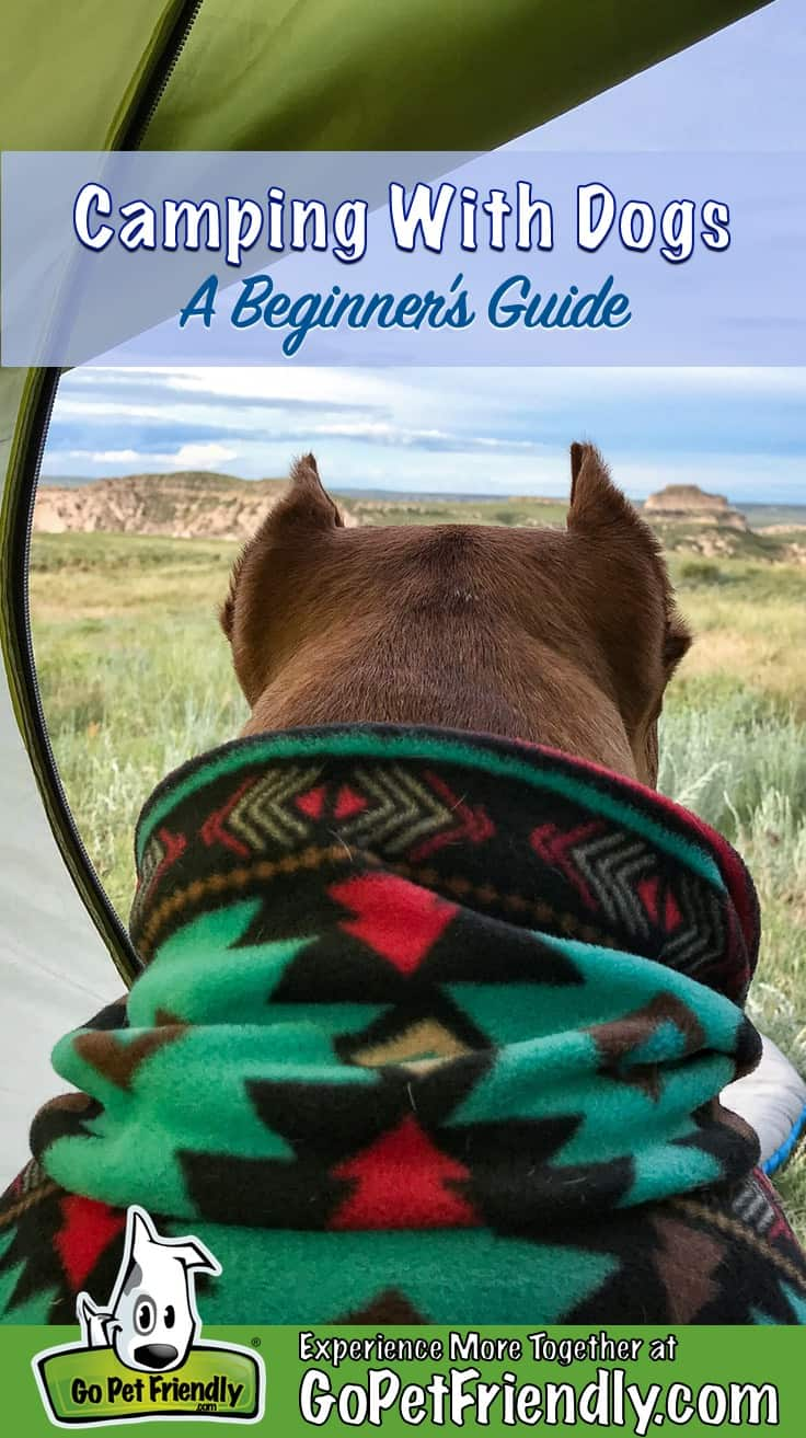 A pitbull dog in a snuggie camping and enjoying a view of the grasslands