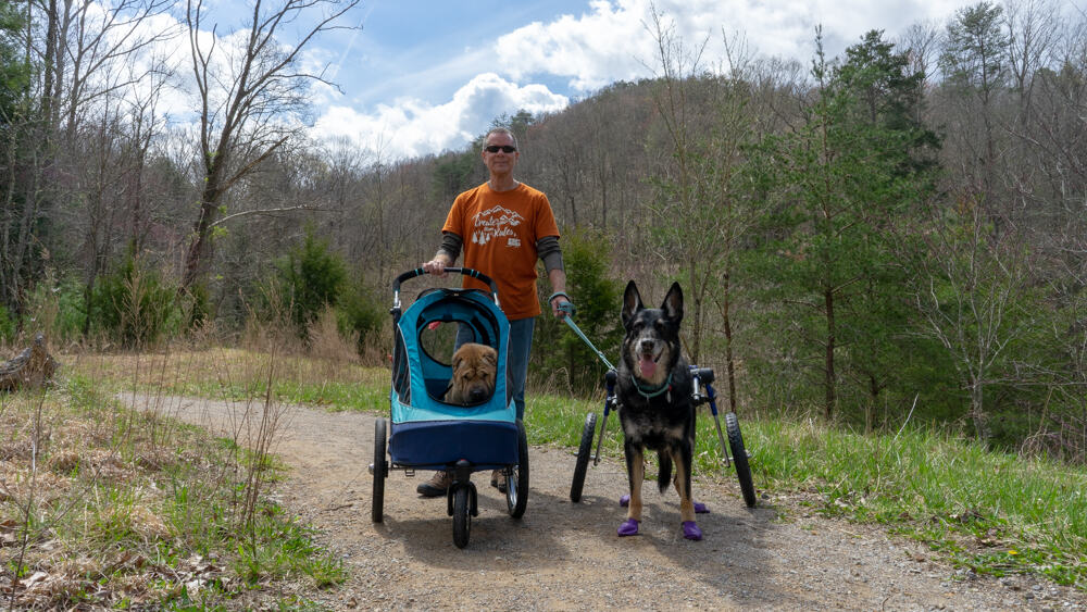 Man with two dogs walking a pet friendly trail at Cumberland Gap National Historic Park