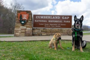 Shar-pei and German Shepherd dogs posing in front of the Cumberland Gap National Historic Site sign in Cumberland, KY