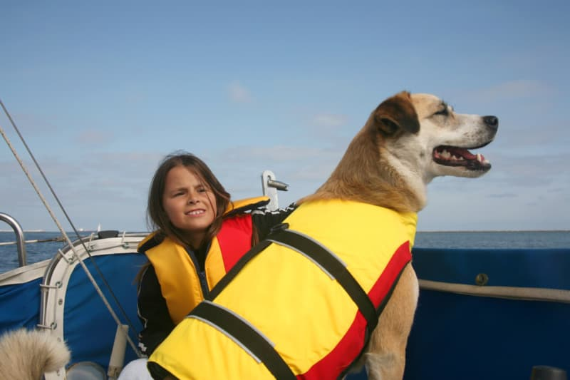 Akita and Australian shepard mixed breed dog and girl sailing across the water