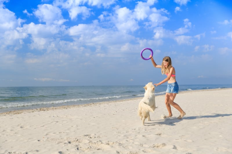 Girl playing with a playful Golden retriever on the beach
