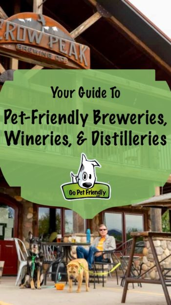Guide to Pet-Friendly Breweries - dogs & person on patio at brewery