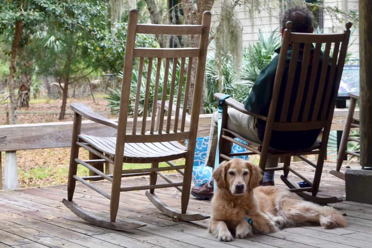 Golden retriever on porch with rockers.