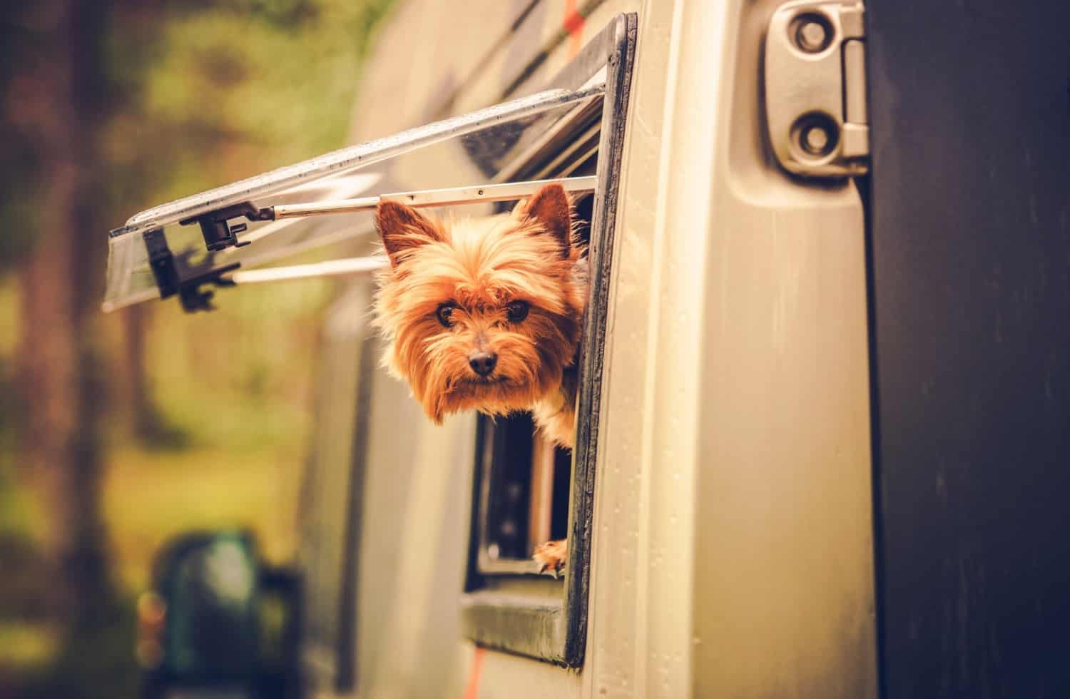 Small dog with his head sticking out the window of a motorhome