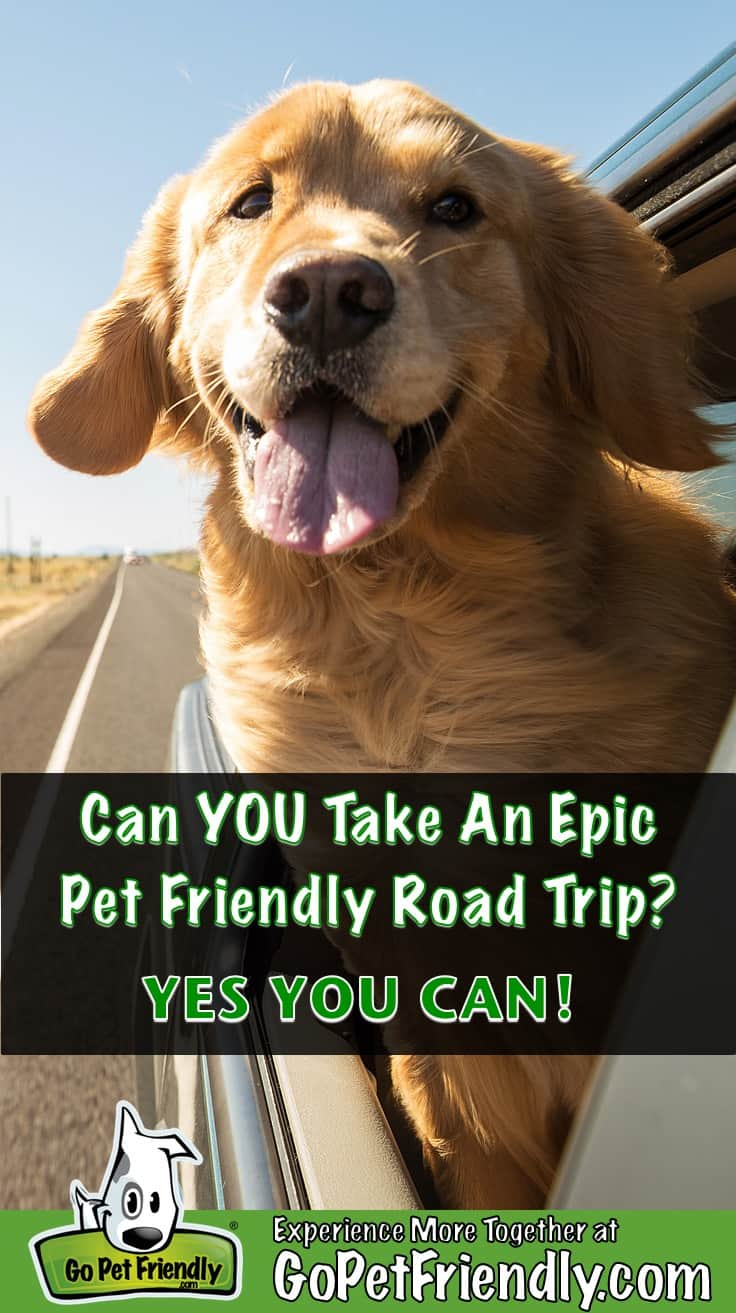 Golden Retriever Dog smiling with his head out the window of a car on a pet friendly road trip