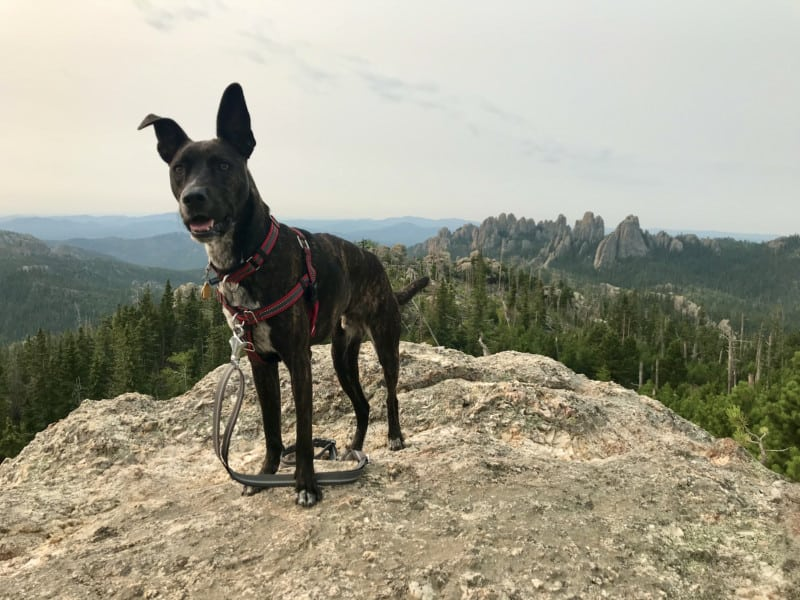 Pet Friendly Custer State Park and South Dakota's Black Hills