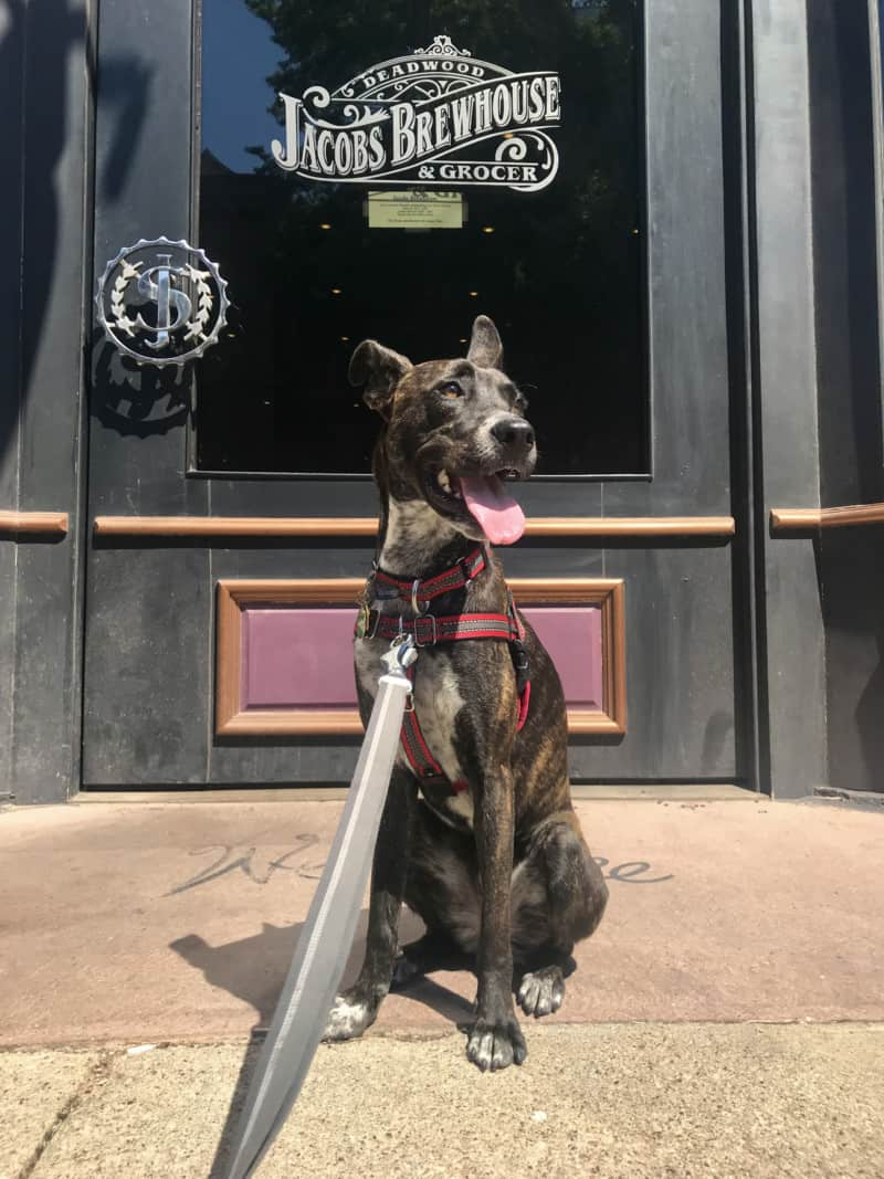 Brindle dog at the front door of pet friendly Jacobs Brewhouse & Grocer in Deadwood, SD