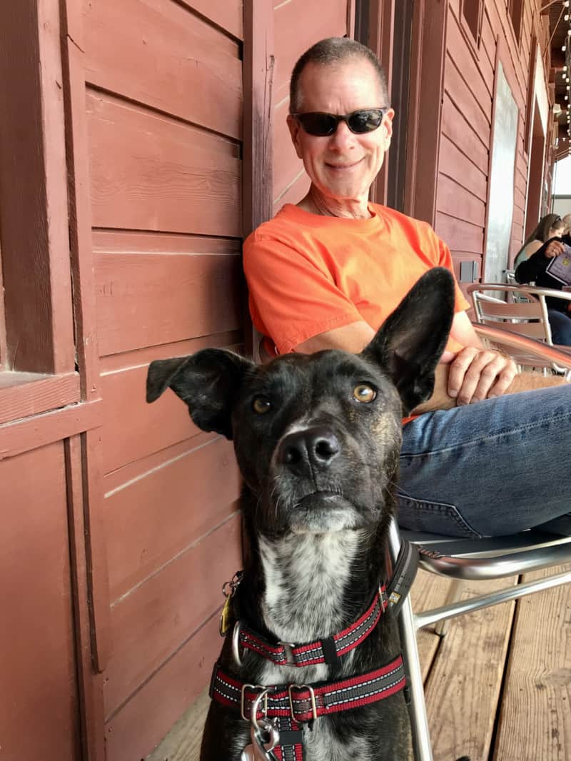 Brindle dog looking at the camera with a man in sunglasses and an orange t-shirt sitting behind him