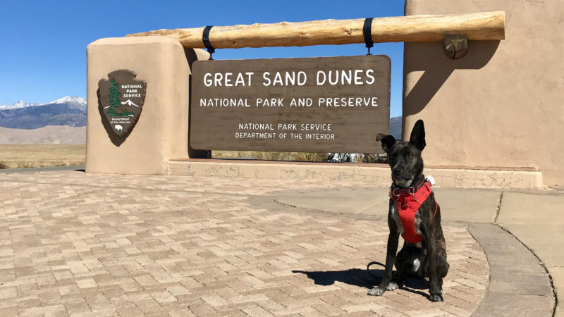 Brindle dog sitting beside the sign for Great Sand Dunes National Park in Colorado
