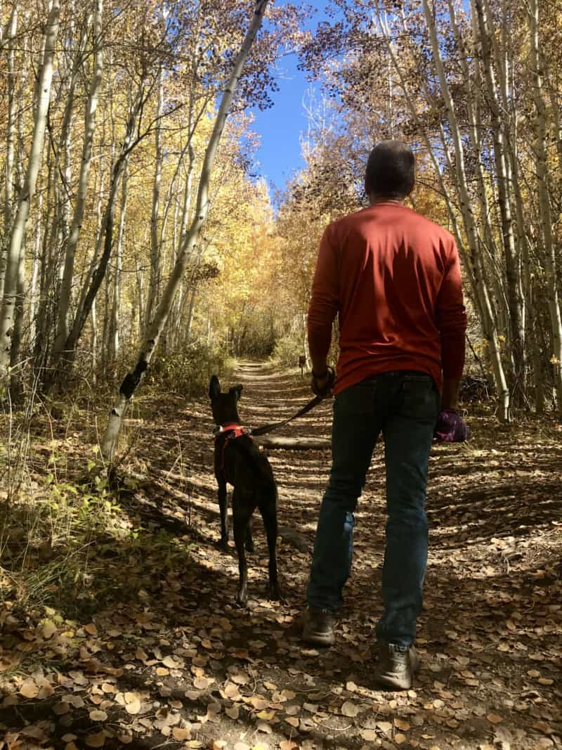 Man and dog on a pet friendly trail at Great Sand Dunes National Park in Colorado