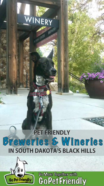 Brindle dog sitting at a pet friendly winery in the Black Hills of South Dakota