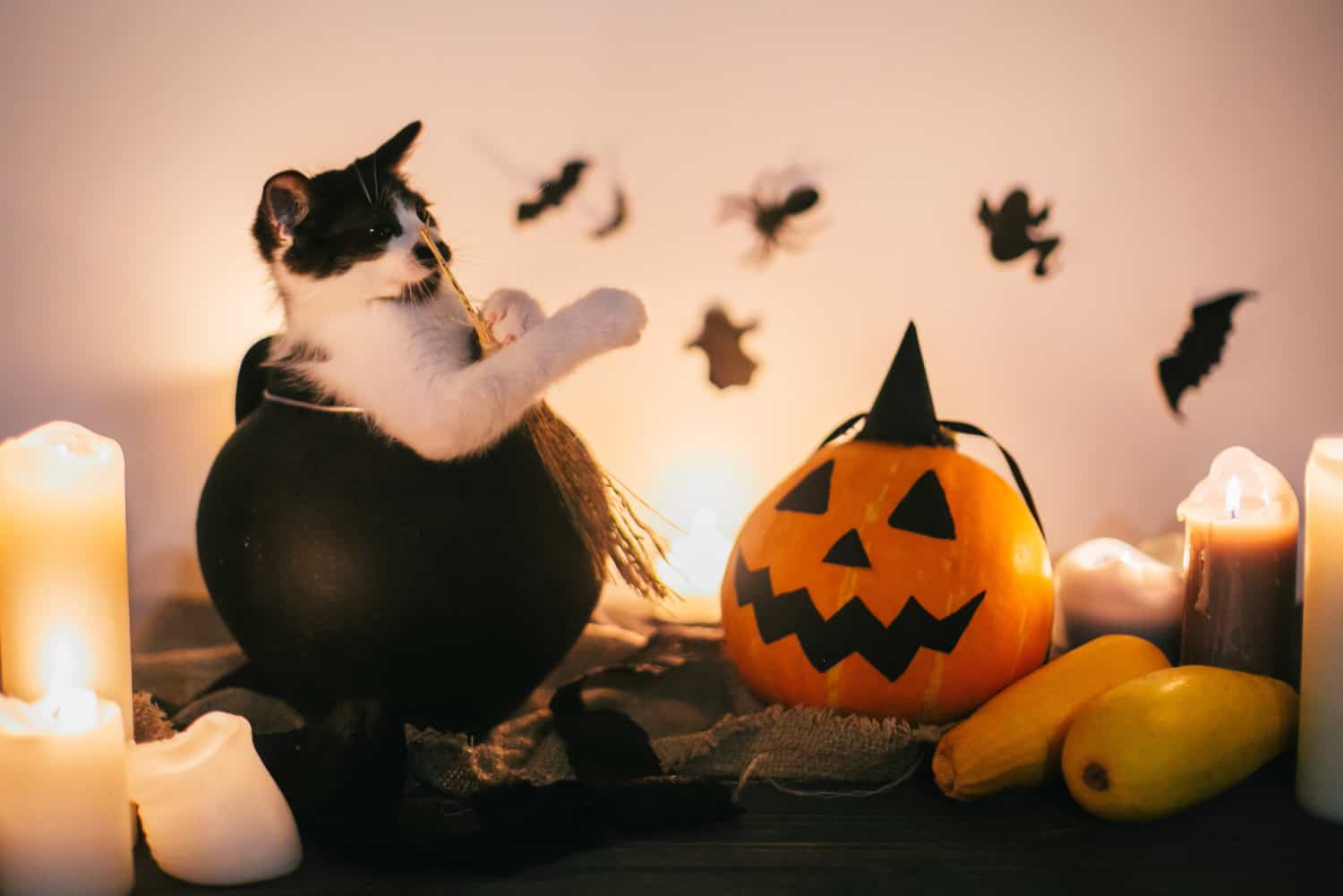 Black kitten sitting in witch cauldron and Jack o lantern pumpkin with candles, broom and bats, ghosts on background in dark spooky room.