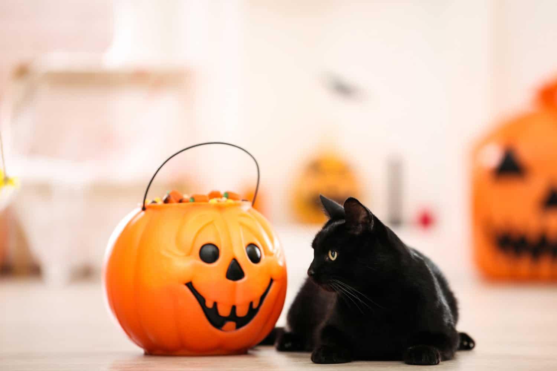 Black cat with candies in halloween bucket