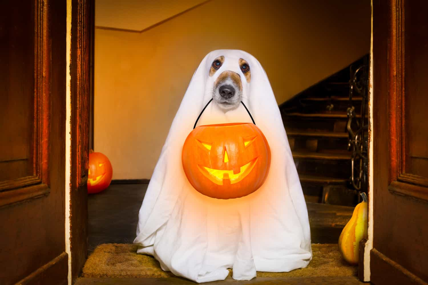 Dog in a ghost costume sitting in the doorway with a pumpkin lantern