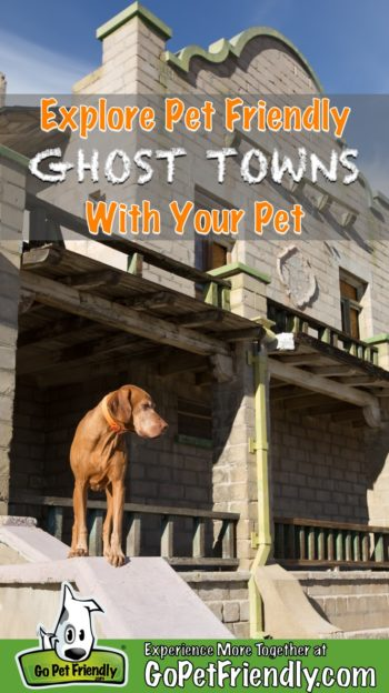 Dog standing on a wall in a pet friendly ghost town