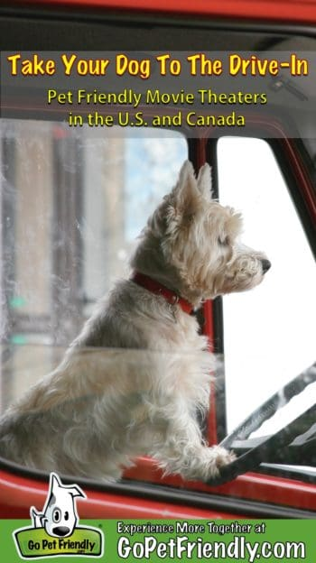 White terrier at the wheel of a red truck parked at a pet friendly movie theater