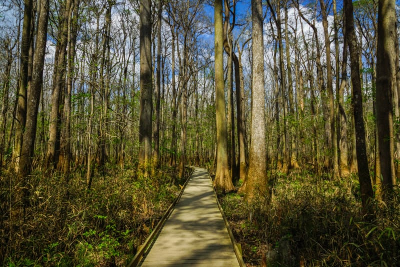 Boardwalk Trail in dog friendly Congaree National Park in SC