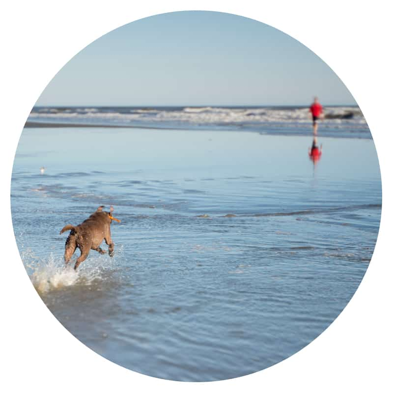 Dog running in the water toward a person wearing a red shirt