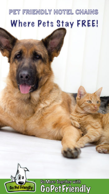 German Shepherd Dog and orange kitten laying together on a white background