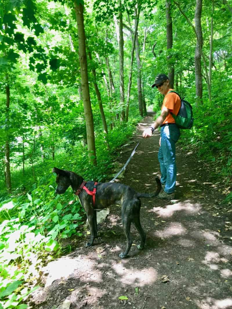 Man and brindle dog on a steep pet friendly trail in Effigy Mounds National Monument in Iowa